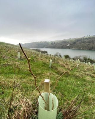 First buds appearing! The young trees were planted in 2019 at Stiddicombe and Thurlestone as part of Bantham's Woodland Improvement Scheme. There is a mix of native woodland trees and include Oak, Holly, Beech and Elderberry. We are excited to watch them grow!   #Bantham #BanthamDevon #BanthamBeach #Winter #Woodland