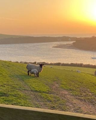Spring lambs out to play! Who else is loving this beautiful weather? ☀️   #Bantham #BanthamDevon #Devon #SouthDevonAonb #SouthWest #Love #Avon