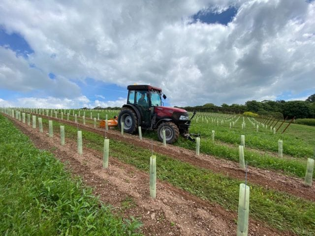 Wishing you all a happy Sunday from the team at Bantham! ☀️  The vines have been planted and we are thrilled to watch them grow. Head over to @banthamvineyard for updates and to follow the journey!   (📸: @manonfosb)  #Bantham #Aonb #Banthambeach #Devon #vineyard #Wine #Vineplanting #Farming
